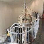University of Alaska Fairbanks: A Whale Raising Exhibit